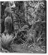 Hoh Rain Forest 3389 Acrylic Print