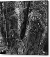 Hoh Rain Forest 3406 Acrylic Print