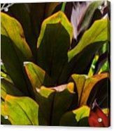 Hojas Verdes Y Rojas Acrylic Print