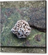 Holey Stone 2 Acrylic Print