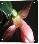 Holiday Cactus - In Shadow Acrylic Print