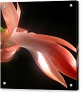 Holiday Cactus - In Silhouette Acrylic Print
