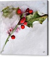 Holly 4 Acrylic Print