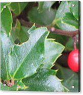 Holly Berry Acrylic Print