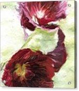 Holly Hock 1d Acrylic Print