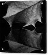 Holly Leaf Acrylic Print