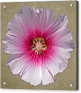 Hollyhock On Linen 2 Acrylic Print
