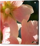 Hollyhocks 5 2017 Acrylic Print