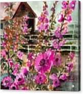 Hollyhocks And Barn Acrylic Print