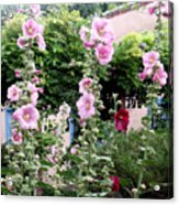 Hollyhocks Taos New Mexico Acrylic Print
