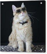 Hollywood Cat Acrylic Print