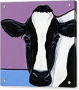Holstein Acrylic Print