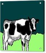 Holsteiner Acrylic Print