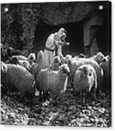 Holy Land: Shepherd, C1910 Acrylic Print