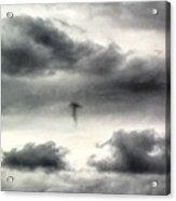 Homage To Stieglitz #3 Jellyfish Acrylic Print