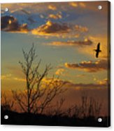 Home For The Night Acrylic Print