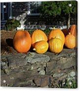 Homegrown Pumpkins Acrylic Print