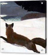 Homer Fox Hunt 1893 Acrylic Print