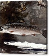 Homer: Trout, 1889 Acrylic Print