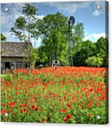 Homestead In The Poppies Acrylic Print
