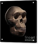 Homo Habilis Skull Acrylic Print