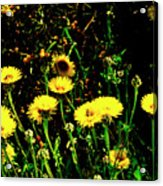 Honey Bee Haven Acrylic Print