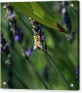 Honey Bee On Flower #4 Acrylic Print
