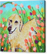 Honey In The Flower Fields Acrylic Print