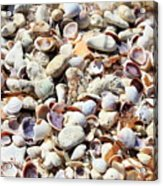 Honeymoon Island Shells Acrylic Print