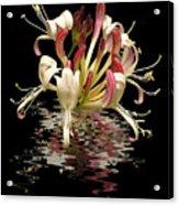 Honeysuckle Reflections Vertical Acrylic Print