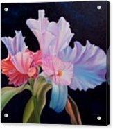 Honney Orquid Acrylic Print