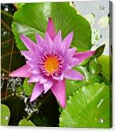 Honolulu Water Lily Acrylic Print
