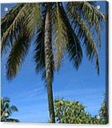 Honomaele Kahanu Gardens Hale O Piilani Ulaino Hana Maui Hawaii Acrylic Print