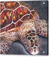 Honu Il Acrylic Print