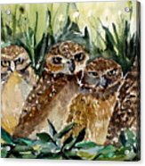 Hoo Is Looking At Me? Acrylic Print