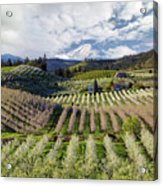 Hood River Pear Orchards On A Cloudy Day Acrylic Print