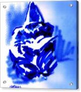Hooded Scholar Acrylic Print
