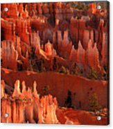 Hoodoos Of Sunset Point At Sunrise  In Bryce Canyon Acrylic Print