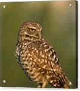 Hoot A Burrowing Owl Portrait Acrylic Print