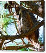 Hoot Is Down There? Acrylic Print