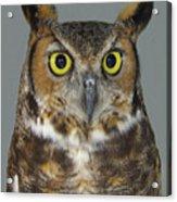 Hoot-owl - I'm Looking At You Acrylic Print