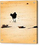 Hop Like A Bunny Bird - Jersey Shore Acrylic Print