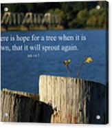 Hope For A Tree Acrylic Print by James Eddy