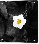 Hope Tucked Away In The Petals  Acrylic Print