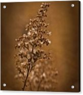 Horicon Marsh - Wildflower Golden Glow Acrylic Print
