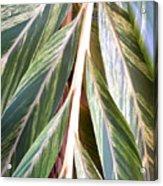 Horizon Of Palm Acrylic Print