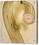 Horn Plantain, 1585 Acrylic Print