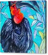 Hornbill  Acrylic Print