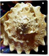 Horned Helmet Shell Top Logarithmic Spiral Acrylic Print