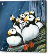 Horned Puffins At Rest Acrylic Print